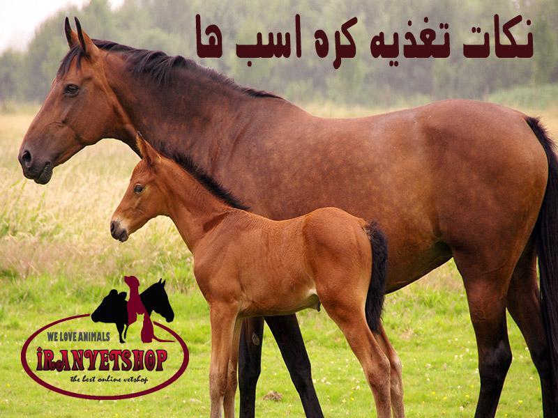 تغذیه کره اسب ها-نکات تغذیه اسب-رشد کره اسب-افزایش رشد کره اسب ها