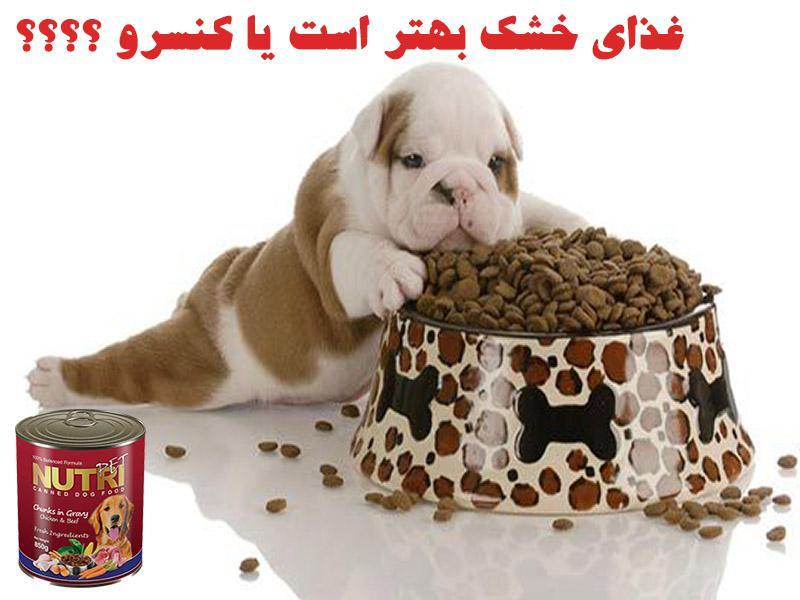 غذای خشک سگ ها-کنسرو خوارکی برای سگ ها