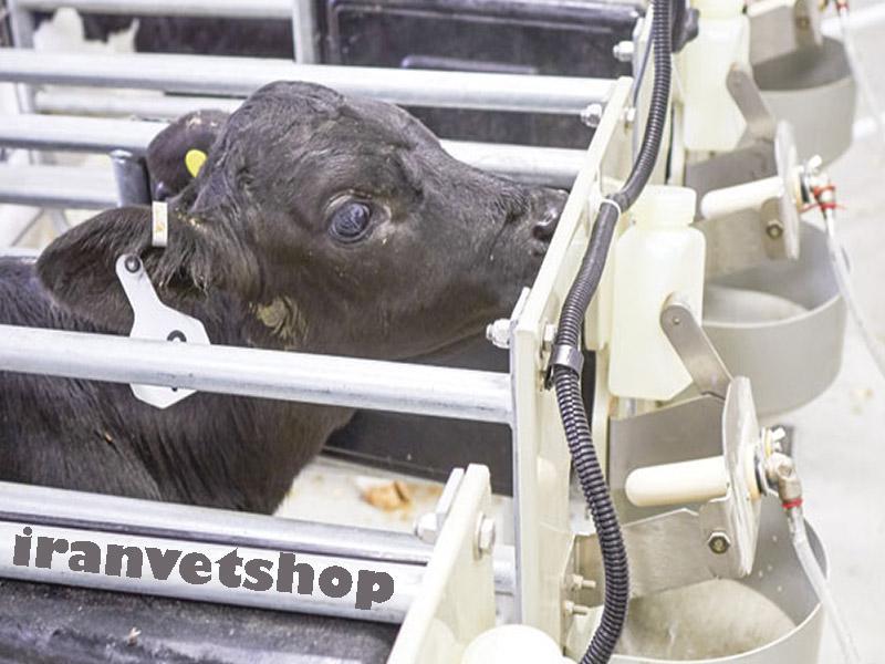 شیر خشک گوساله-شیر خشک پرسا-شیر خشک گوساله پرسا-مزایای شیر خشک گوساله