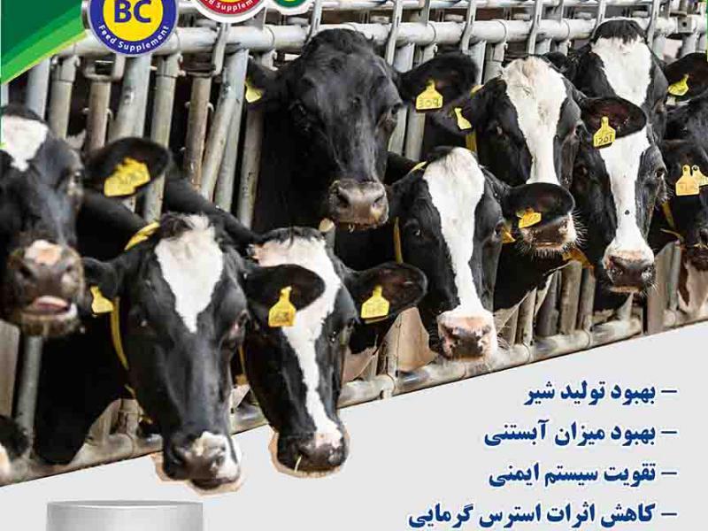 پروبیوتیک دامی - پروبیوتیک گاو - پروبیوتیک گوسفند - تقویت سیستم ایمنی دام - افزایش رشد - افزایش شیر گاو