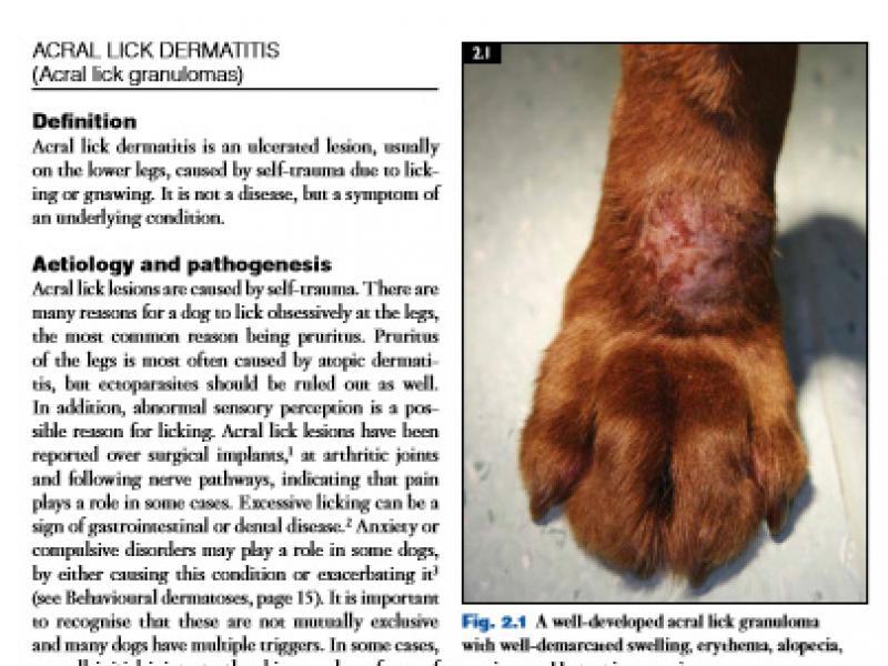 انتشار سال 2019 - کتاب های دامپزشکی - رفرنس دامپزشکی - بیماری های پوستی سگ - بیماری های پوستی گربه